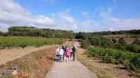Balade vigneronne à Fos